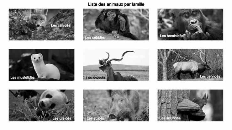 liste des animaux par famille canides felides mustelides ursides camelides bovides cervides