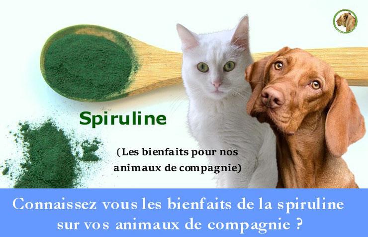 les bienfaits de la spiruline sur les animaux de compagnie chiens chats chevaux