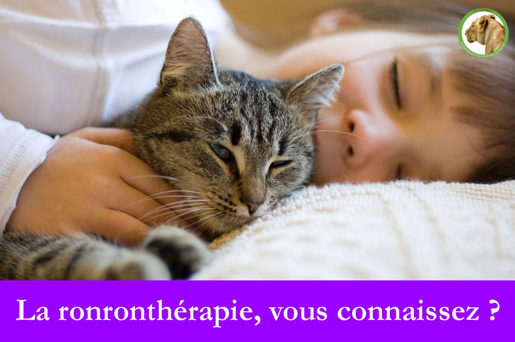 chat ronron ronrontheraphie cat ronronnement stress enfant adulte
