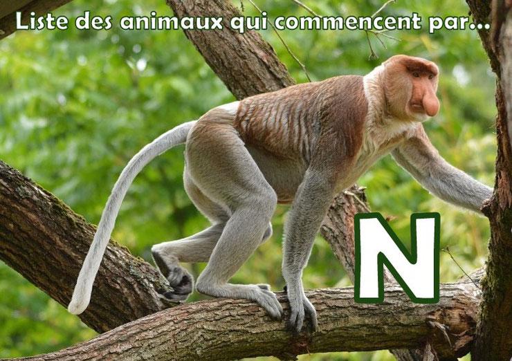 liste des animaux qui commencent par la lettre N