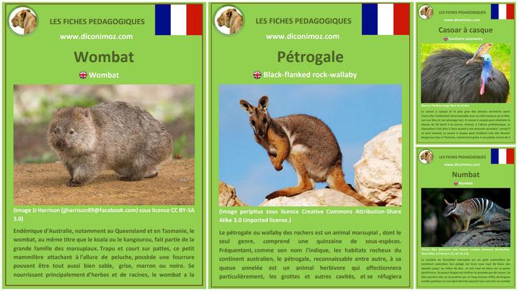 fiches animaux australie pdf a telecharger et à imprimer pour l'ecole ou la maison  wombat petrogale wallaby des rochers casoar a casque numbat animal facts