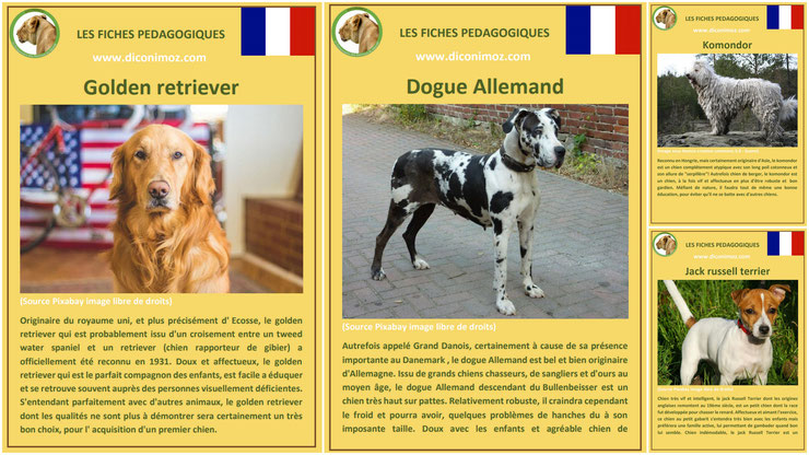 fiche animaux animal de compagnie  chien à telecharger et a imprimer pdf comportement origine caractere race golden retriever chien guide d'aveugles dogue allemand komondor jack russell terrier chien the mask