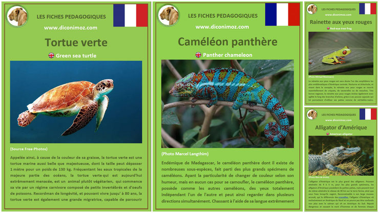 fiches animaux pedagogiques reptiles et batraciens à telecharger et a imprimer pdf download animal fact tortue verte cameleon panthere rainette yeux rouges alligator amerique