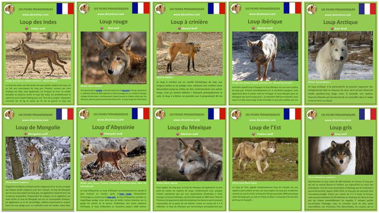 fiches animaux pdf les loups du monde entier à telecharger et a imprimer : loup gris, loup d'abyssinie, loup arctique, loup de l'est, loup du mexique, loup indien 10 species of wolf wolves