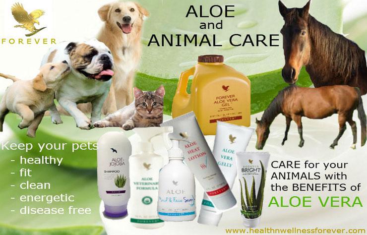 produits bien etre animal animaux gel aloe vera vertu sante soins animal care forever veterinaire chevaux chat chien