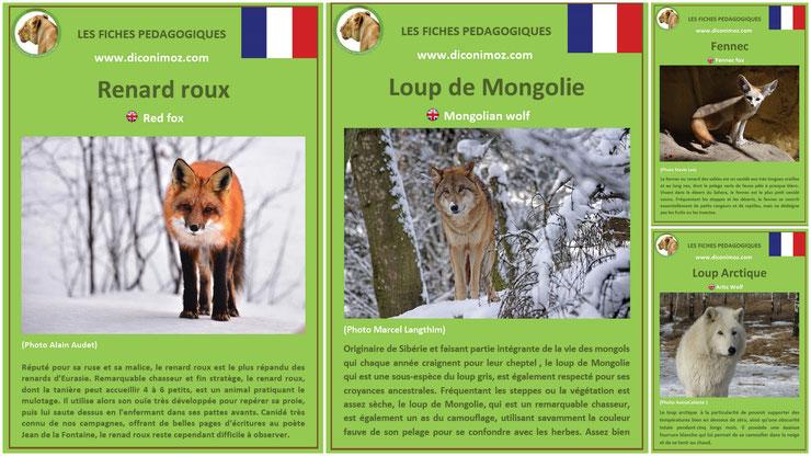 fiches animaux pedagogiques loups renard canides sauvages à telecharger et a imprimer pdf download animal fact renard roux loup mongolie loup arctique fennec