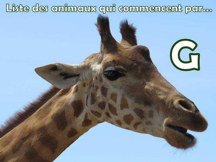 liste des animaux qui commencent par la lettre G