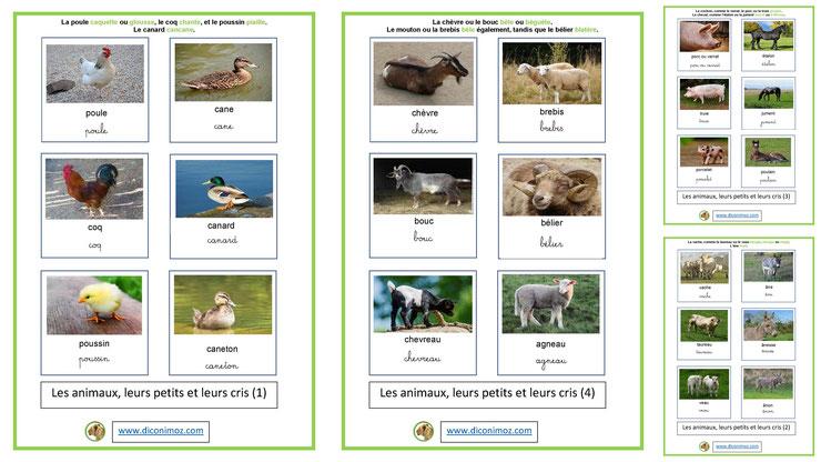 cartes fiches nomenclature animaux ecriture cursives petits famille mâle femelle bebe cris maternelle apprentissage enfants pedagogiques