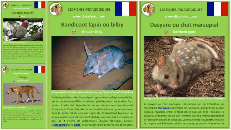 fiche animaux australie à telecharger et a imprimer pdf taille poids habitat longevite alimentation predateur bandicoot lapin cacatoes rosalbin dasyure chat marsupial dingo