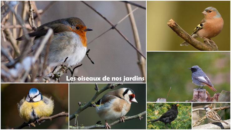 apprenez a reconnaitre  à coup sur les oiseaux de nos jardins