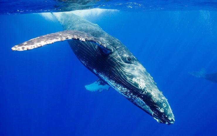 fiche animaux mammiferes marins dictionnaire monde