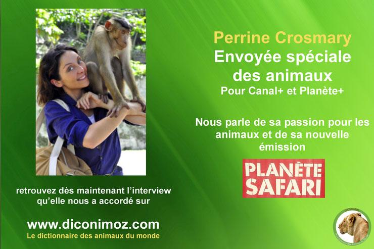 interview planete safari perrine crosmary