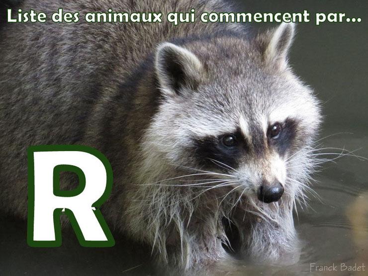liste des animaux qui commencent par la lettre R