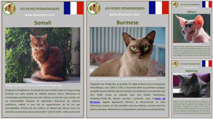 fiche animaux animal de compagnie  chat à telecharger et a imprimer pdf comportement origine caractere sphynx somali burmese nebelung