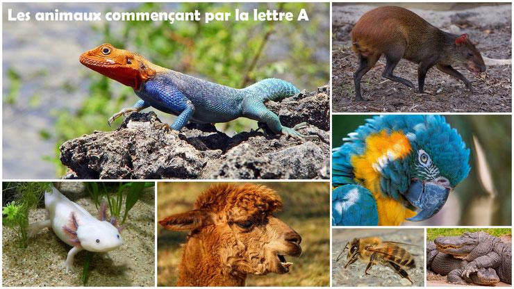 liste des animaux avec photos qui commencent par la lettre A