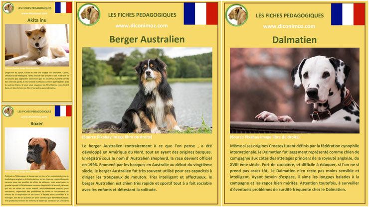 fiche animaux animal de compagnie  chien à telecharger et a imprimer pdf comportement origine caractere berger australien akita inu dalmatien boxer