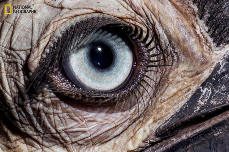 oeil animal jeu yeux a qui appartient animaux quizz