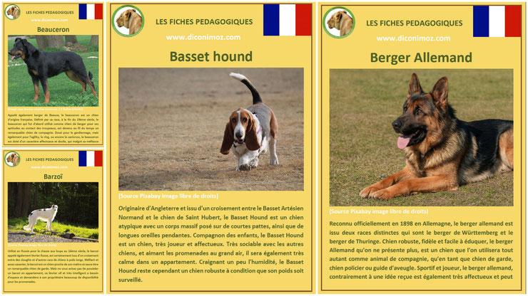 fiche animaux animal de compagnie  chien à telecharger et a imprimer pdf comportement origine caractere berger allemand beauceron basset hound barzoi levrier russe