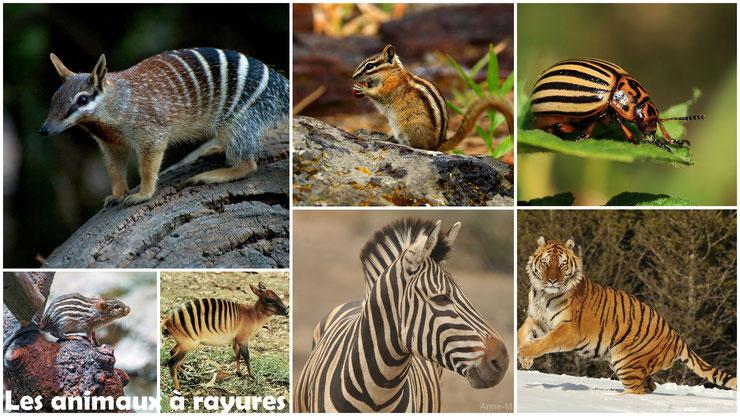 liste des animaux rayés ou a rayures