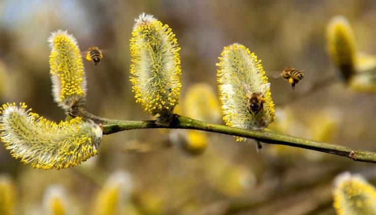 pollen definition vocabulaire