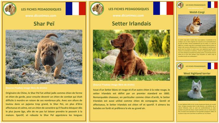 fiche animaux animal de compagnie  chien à telecharger et a imprimer pdf comportement origine caractere race shar pei setter irlandais welsh corgi westie west highland terrier
