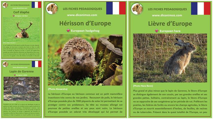 fiches animaux pedagogiques pdf à imprimer et à telecharger devoir maison expose lievre lapin de garenne cerf elaphe herisson bois