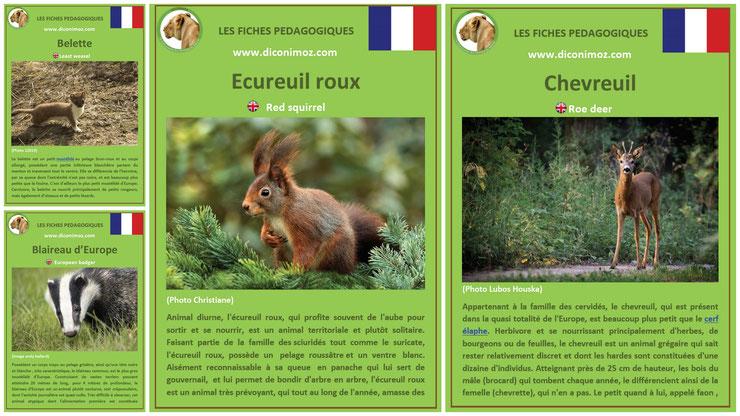 fiches animaux pedagogiques pdf à imprimer et à telecharger devoir maison expose ecureuil chevreuil blaireau belette
