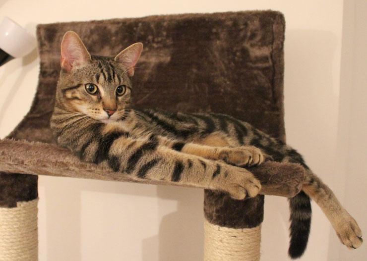 comment choisir son arbre a chat taille prix conseil boutique matiere deco design