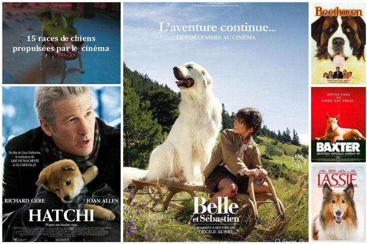 15 races de chiens propulsé par le cinéma vedette celebres