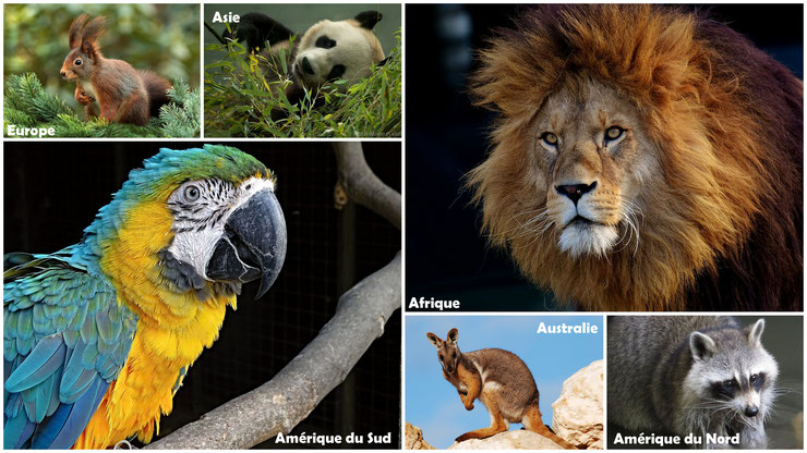 liste des animaux par continent pays
