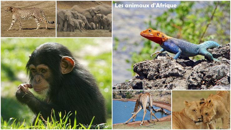 liste alphabétique des animaux d'afrique