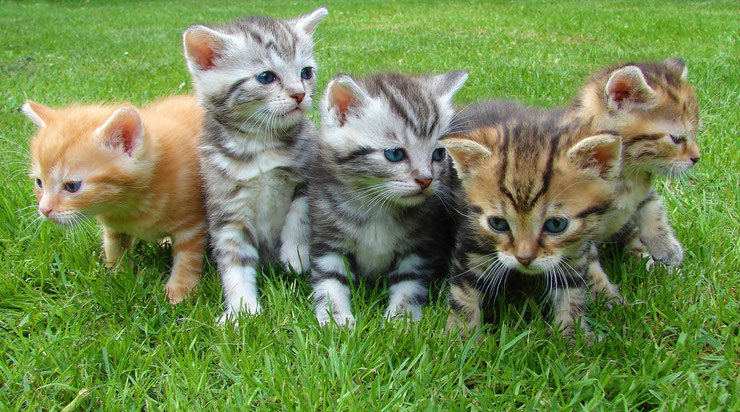 groupe de bebés chat chatons photo de famille adorables mignons cute cat family