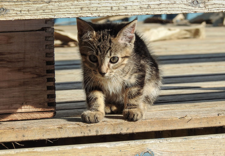 chaton qui joue a cache cache mignon bebe chat cute baby cate kitten