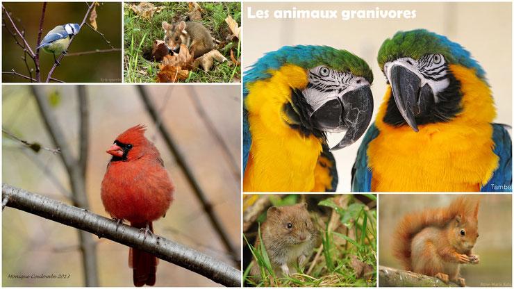 les animaux granivores regime alimentaire cours svt cm1 cm2 ecole primaire college pedagogie programme devoir expose