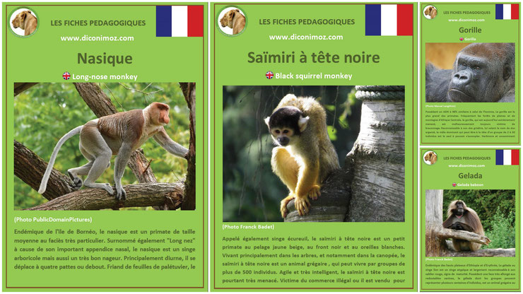 fiches animaux singe primates à telecharger et a imprimer pdf download animal fact gorille gelada saimiri nasique