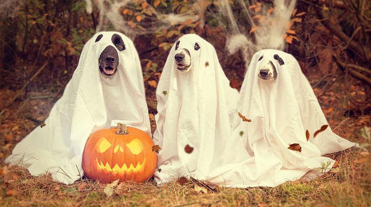 chien fantome halloween