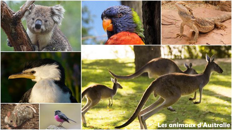 liste alphabétique des animaux d'Australie et Océanie