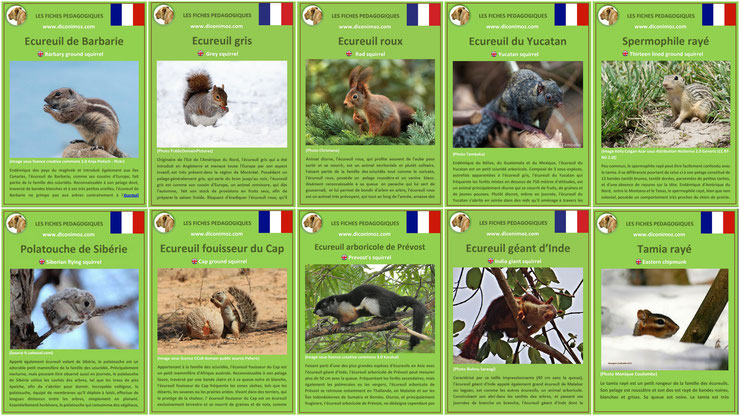 fiches animaux ecureuils 10 especes a travers le monde à telecharger et a imprimer pdf download animal fact ecureuil de barbarie gris roux fouisseur arboricole terrestre polatouche tamia spermophile yucatan inde