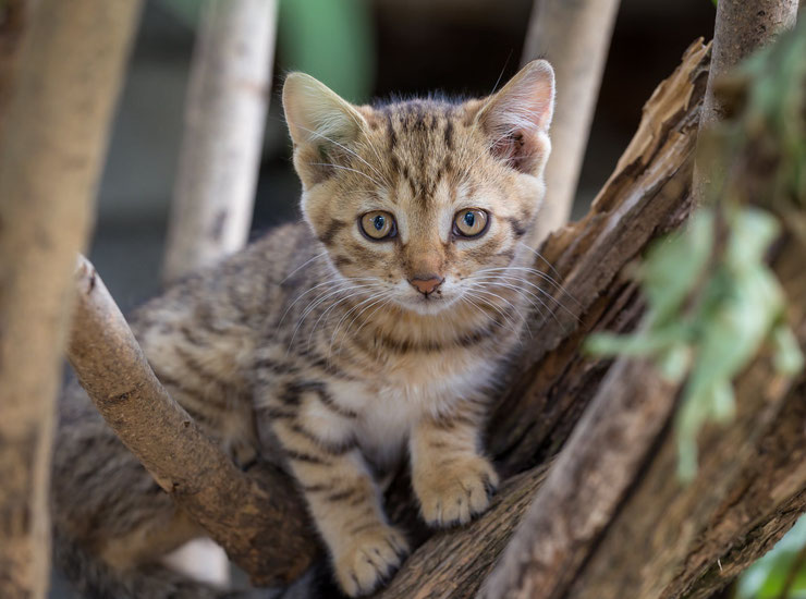 mignon petit chaton dans les arbres bebe chat kitten in the tree photo animaux mignons