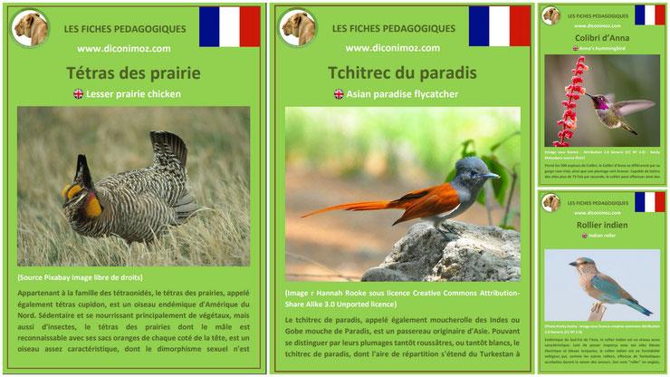 fiches animaux oiseaux à telecharger et a imprimer pdf download animal facts bird tchitrec du paradis tetras des prairies colibri d'anna rollier indien