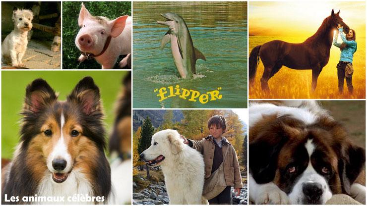 les animaux connus celebres cinema film series