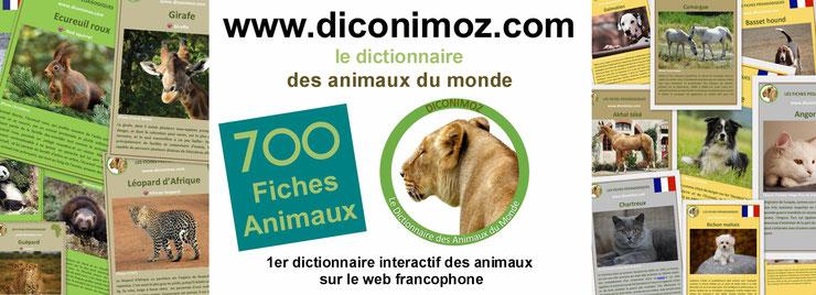 dictionnaire des animaux du monde diconimoz liste fiches animaux sauvages animaux de compagnie chien chat chevaux