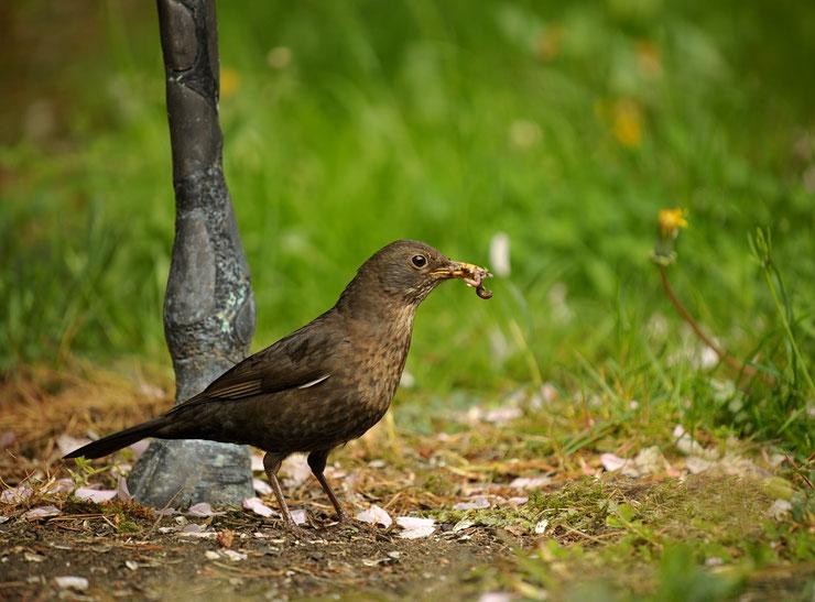 oiseau insectivore ver de terre regime alimentaire des animaux