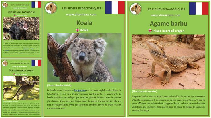 fiches animaux pedagogiques pdf à imprimer et à telecharger devoir maison australie koala kangourou agame barbu diable de tasmanie