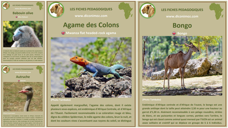 fiches animaux afrique à telecharger et a imprimer pdf download animal fact africa