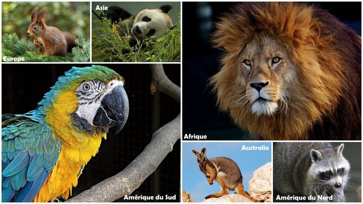 liste des animaux par continent europe amerique afrique asie australie