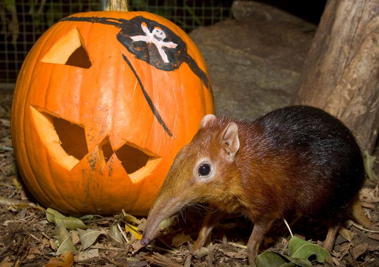 photo animaux étrange halloween