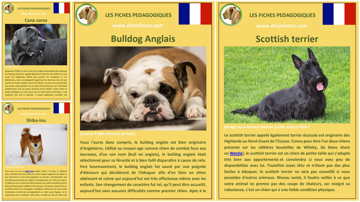 fiche animaux animal de compagnie  chien à telecharger et a imprimer pdf comportement origine caractere race cane corso bouledogue anglais bulldog shiba inu scottish terrier
