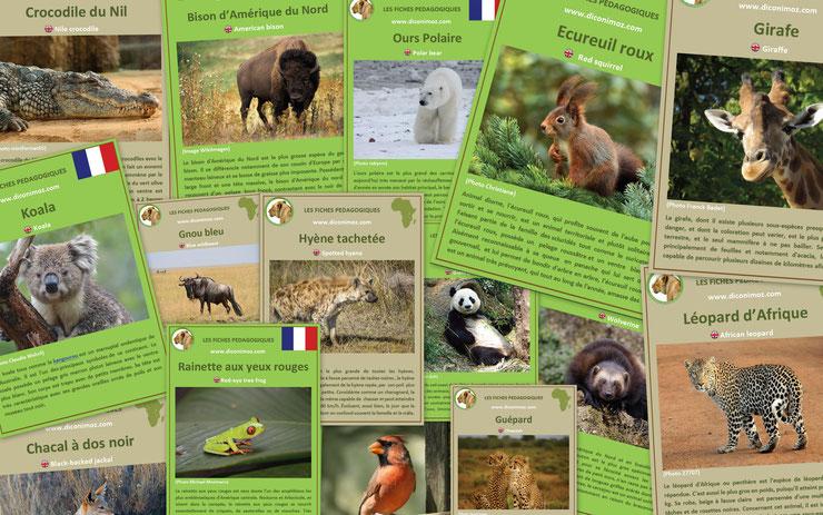 fiche fiches imprimable telechargeable pdf pedagogique imprimer telecharger download facts animaux sauvages