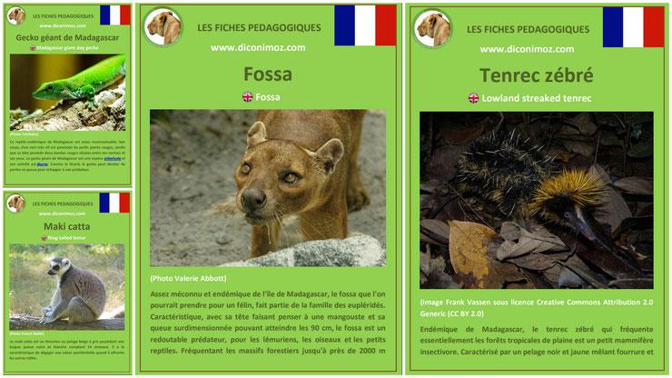 fiches animaux madagascar pdf a telecharger et à imprimer pour l'ecole ou la maison  fossa gecko geant tenrec zebre maki catta animal facts